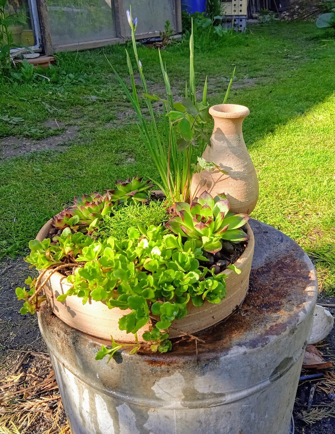 keramicka samozavlazovaci bonsaj miska zardinka